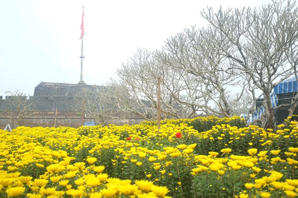Chợ hoa Tết ở Huế