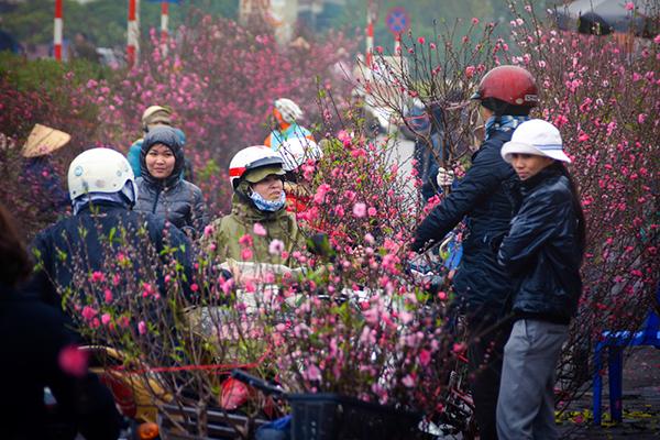 Thanh Hóa ngập sắc hoa đào ngày Tết